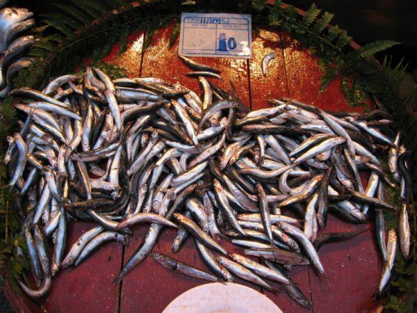 Hamsi (Black Sea anchovies), photo by Yigal Schleifer