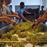 Greece's 2015 Wine Harvest