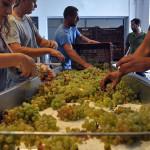 Greece's 2015 Wine Harvest