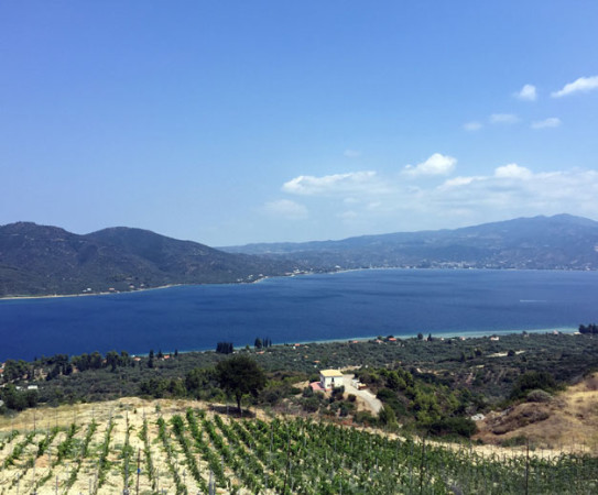 Vineyards near the sea in Greece, photo by Angelos Damoulianos