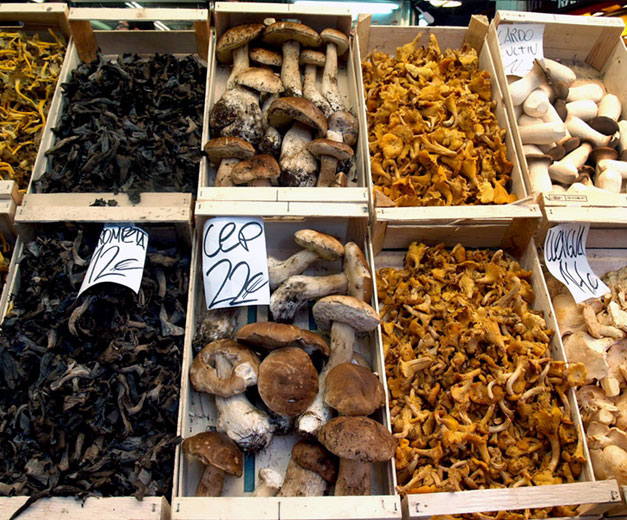 Mushrooms for sale in Barcelona, photo by Paula Mourenza