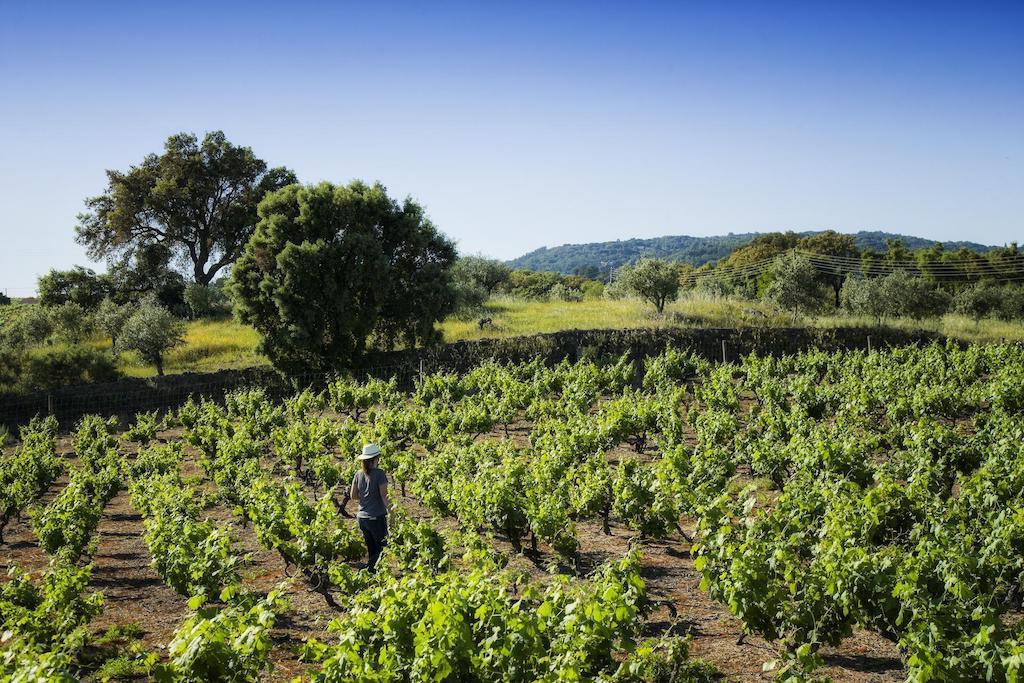 vineyard alentejo wine