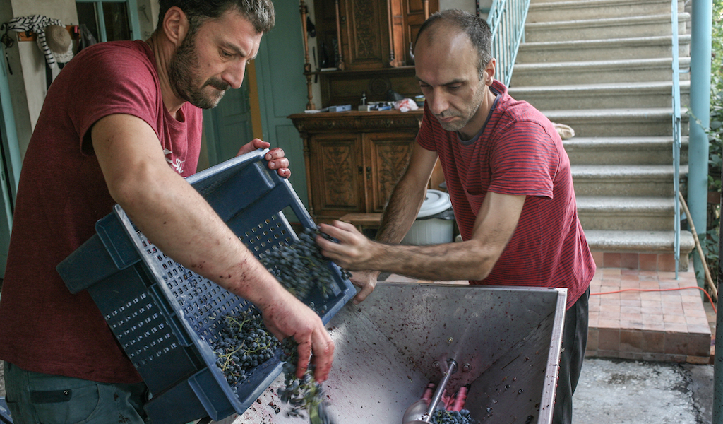 Irakli Bluishvili and his friend Levan crushing the last of the Saperavi, photo by Paul Rimple