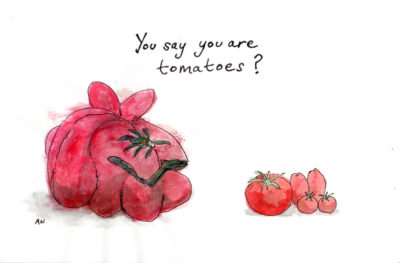 Georgian tomatoes vs. conventional, illustration by Andrew North